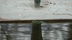 Frog / Frosch (Mado46) Tags: bxl06 berlin botanicalgarden botanischergarten mado46 frog frosch