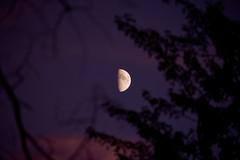 A98I4962 (CdnAvSpotter) Tags: moon lune luna twilight after dark photography