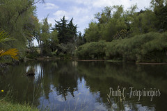 Camino al Castillo (Pauluris) Tags: paisajes villadeleyva paisajismo landscape physis