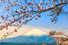 One morning during the cherry blossom season. Mt. Fuji, Japan [OC][2304x1536] by bijoux (-WildPigs-) Tags: reddit earth