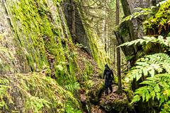 walking in a gorge in autumn (VisitLakeland) Tags: finland lakeland tahko autumn gorge hiking luonto nature outdoor retkeily rotko scenery syksy ulkoilu walking