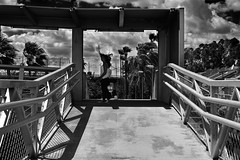The wind in the walkway (ricardocarmonafdez) Tags: ciudad city urbanscape viento wind contrast sunlight lights shadows silueta silhouette walkway monocromo monochrome blackandwhite bn nikon 24120f4gvr d850 people streetphotography