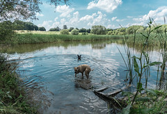 play time (taxtamas) Tags: lake sky clouds dog doggy dogs outdoor nature water