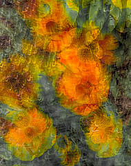 Profusion (sdmvqedd30) Tags: flowers leaves blur icm layers orange blooms garden summer impressionist bright leica texture