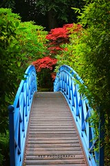 Johnstone Gardens in Aberdeen (julz.adams) Tags: scotland bridge trees landscape land camera 80d canon amazing beautiful photography red gardens aberdeen thankyou