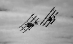 DSC08401 (Brian Wadie Photographer) Tags: breitling ravens vampires kestrel mig15 parachutes polariser redarrows wingwalkers