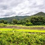 Thaïlande - Elephants sanctuary thumbnail