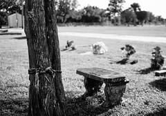 Oh, tie a yellow rope around the old oak tree... (Twila1313) Tags: rope graves cemetery graveyard death monochrome blackandwhite blackwhite bw sonynex5n makinon28mm28