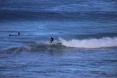 IMG_3690 (gervo1865_2 - LJ Gervasoni) Tags: surfing with whales lady bay warrnambool victoria 2017 ocean sea water waves coast coastal marine wildlife sealife blue photographerljgervasoni