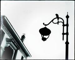 * (PattyK.) Tags: snapseed greece grecia griechenland hellas ellada amateurphotographer huaweip9 ελλάδα σεπτέμβριοσ 2018 ιωάννινα γιάννενα ήπειροσ βαλκάνια ηπόλημου όμορφηπόλη άσπροκαιμαύρο nonochrome blackandwhite ioannina giannena giannina epirus ipiros balkans bird streetlamp λάμπα πουλί δημαρχείο