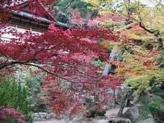 a (48) (hiromi89) Tags: japan beauty beautiful scenery flower wood pond