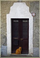 Per le vie di Vezzo (frank28883) Tags: vezzo gignese verbanocusioossola gatto cat chat gato porta street