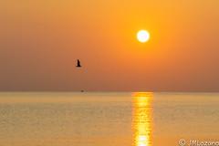 volando delante del sol (josmanmelilla) Tags: melilla mar agua españa verano pwmelilla flickphotowalk pwdmelilla pwdemelilla amaneceres amanecer sol sony