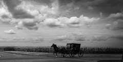 Yesteryear (bdnils) Tags: cloudporn clouds skyporn sky horse horseandbuggy illinois amishcountry amish countryside landscape monochrome bnw blackandwhite