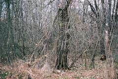 (kotmariusz) Tags: trees autumn poland analog 35mm filmphotography nature suburbs polska