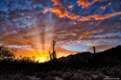 Sabino Canyon Sunset (Stuart Schaefer Photography) Tags: arizona outdoor outdoors tucson dusk landscape sonya7m3 sunset sabinocanyonnationalpark park nationalpark goldenhour