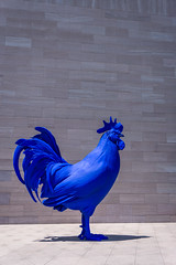 Rooster (dayman1776) Tags: national gallery art east building modern museum cock farm animal blue german washington dc
