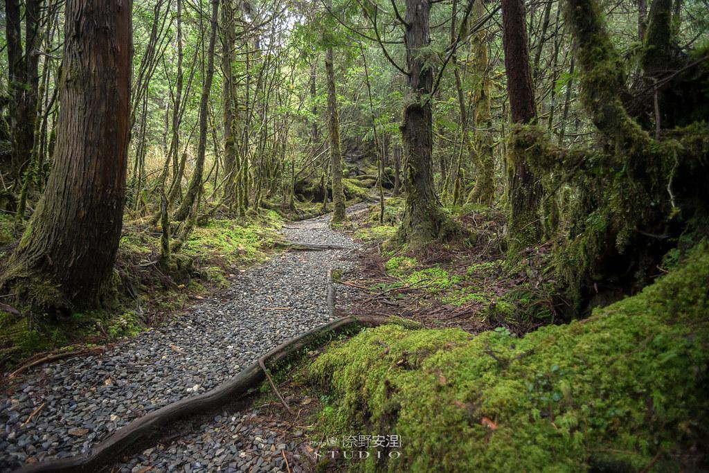 太平山翠峰湖環山步道 |走在泥濘的道路上,只為途中美景 | 宜蘭大同鄉51