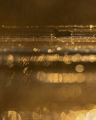 Green-winged Teal (T L Sepkovic) Tags: greenwingedteal teal duck waterfowl goldenhour sunrise backlighting bokeh morning mist morningmist canon 7dmkii lenscoat wildlife wildlifephotography