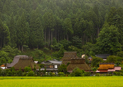 Thatched roofed houses in a traditional village against a forest, Kyoto Prefecture, Miyama, Japan (Eric Lafforgue) Tags: agriculture architecture asia buildingexterior builtstructure colorimage countryside day farm forest horizontal house japan japan18098 japaneseculture kitakuwadadistrict kyotoprefecture landscape miyama nopeople outdoors paddyfield photography protection rice roof ruralscene summer thatchedroof tradition tranquility traveldestinations village