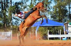 Desemboçalando (Eduardo Amorim) Tags: gaúcho gaúchos gaucho gauchos cavalos caballos horses chevaux cavalli pferde caballo horse cheval cavallo pferd pampa campanha fronteira quaraí riograndedosul brésil brasil sudamérica südamerika suramérica américadosul southamerica amériquedusud americameridionale américadelsur americadelsud cavalo 馬 حصان 马 лошадь ঘোড়া 말 סוס ม้า häst hest hevonen άλογο brazil eduardoamorim gineteada jineteada
