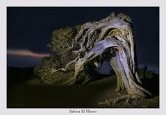 Sabina El Hierro (yoni103) Tags: canon6d canarias cielosnocturnos elhierro sigma2470 sigma paisajes manfrotto sabinas sabinasdelhierro oscuros nocturnas fotografianocturna bosques