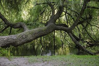 the castle pond