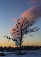 The Tree Sunset (CraDorPhoto) Tags: canon6d landscape tree silhouette sunset clouds sky colour espoo haukilahti finland outdoors nature