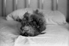 Topsy Turvy (squirtiesdad) Tags: pepper bed diyfilmscanning selfdeveloped epson v600 monochrome blackandwhite bw bwfp analogue analog aristaedu arista iso100 35mm film vivitar 220sl