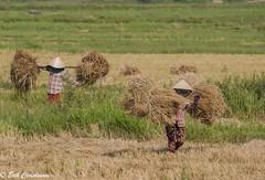 -c20180511-810_7532 (Erik Christensen242) Tags: thànhphốhộian quảngnam vietnam vn hey women heycollection color nang