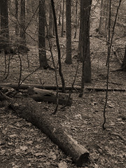 Vercors, 2017 (Olivier BERTRAND) Tags: vercors blackandwhite blackandwhitephotography digitalphotography neige forest forêt hiver isère landscape lumix25mm lumix noiretblanc nature naturallight olivierbertrand olympusem5markii winter woods hybridcamera 25mm panasoniclumix25mm