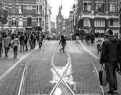 Tram Ways [Amsterdam Atmosphere] (236/365) (Walimai.photo) Tags: street calle candid robado amsterdam holanda holland netherlands nikon d7000 nikkor 35mm blanco negro byn bw branco preto blanc noir
