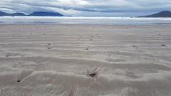 aspettando l'onda nella spiaggia di Inch (SergioBarbieri) Tags: inchbeach countykerry coast beach ireland kerryseascape kerrylandscape
