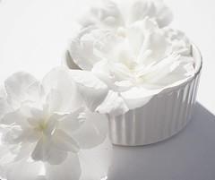 a small white pot with white flowers (quietpurplehaze07) Tags: saturday smileonsaturday whiteonwhite pot flowers white