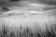 Blowing in the Wind (Paul Timlett) Tags: grass landscape monochrome bnw abstract blackwhite nikond810 parsonagedown salisburyplain outdoors