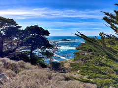 NorCal Travels 2018-20 (Maggie Houtz) Tags: norcal horizon lgv20 phoneography pointlobos