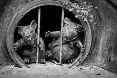 Rubber Rats (MTSOfan) Tags: rats decoration drainpipe halloween bw