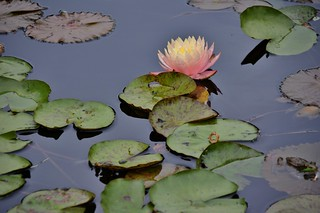 David Braley and Nancy Gordon Rock Garden, Royal Botanical Garden, Hamilton, ON