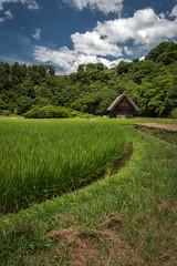Ogimashi - Vallée de Shirakawago - Japon (alouest225) Tags: japon shirakawago ogimashi village alouest225 nikon d750 rizière inexplore