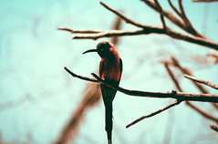 __🐦_____ (0sire) Tags: bird tree trees red shadow nature bokeh