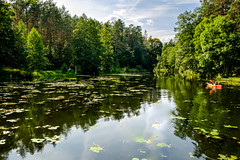 18-08_T2CF1178_LR (Jacek P.) Tags: poland polska podlasie augustowskie kanałaugustowski las forest woda canal kayak summer
