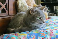 Millie 12 July 2018 0206Ri 4x6 (edgarandron - Busy!) Tags: cat cats kitty kitties tabby tabbies cute feline