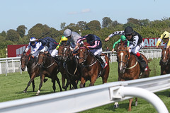 Molecomb Stakes (Arkle1) Tags:
