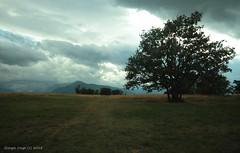 (- Crupi Giorgio (official)) Tags: italy reggio emilia landscape nature trees clouds canon canoneos7d sigma sigma1020mm