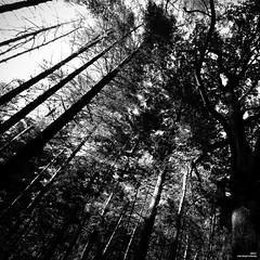 Redoutable. (Un jour en France) Tags: monochrome forêt arbre noiretblanc noiretblancfrance bois ciel