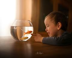 everybody is a Genius (agirygula) Tags: goldfish boy laughing wonder nature animal child children fishinglass glass lightwindowlight genius fun