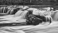 3242SE The River Ure at Aysgarth (foxxyg2) Tags: water waterfalls cascades wensleydale yorkshire northyorkshire riverure le longexposure mono monochrome bw blackwhite silverefex niksoftware dxo