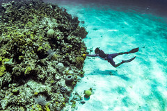 (Fifinator) Tags: underwater photography canon sl2 spearfishing spear fish ikelite bahamas nassau caribbean carribbean diving deep free coral reef harvest food dive freedive turqoise