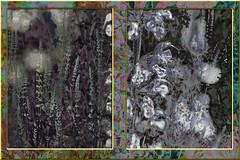 La campiña (seguicollar) Tags: imagencreativa photomanipulación art arte artecreativo artedigital virginiaseguí flores flor campo hierba campiña diptico