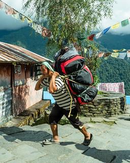 Himalayan Porter